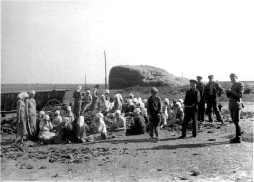 Группа крестьянок и подростков в окрестностях Днепропетровска. На снимке справа — итальянский военнослужащий.